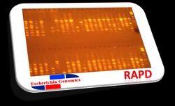 Honey Bee RAPD DNA Fingerprinting