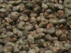 Shell Cashew Nuts