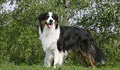 Pet Animals General Treatment Services
