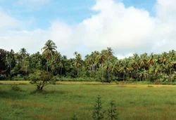 Large Land Dealings