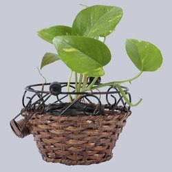 Round Hanging Wicker Planter Basket