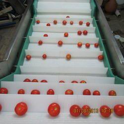 Fruit Washing Modular Conveyors