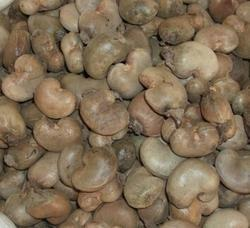Raw Cashews Origin (Nigeria)