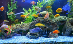 Fish Aquarium In Ernakulam Latest Price Amp Mandi Rates