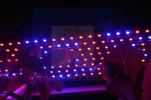 Led grow light strip bars indoor hydroponic lights northys urban led grow light strip bars indoor hydroponic lights aloadofball Choice Image