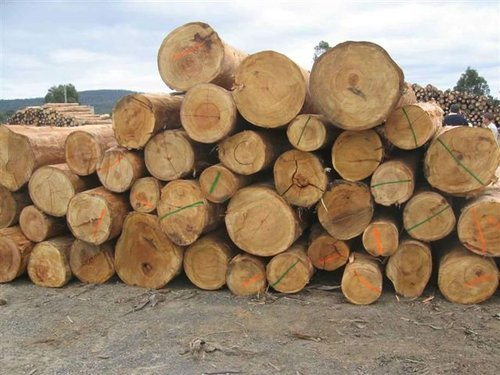 Log Now Ayous Hardwood Lumber Exporter From Cbd Belapur