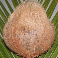 Pollachi Semi Husked Coconut