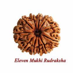 Eleven Mukhi Rudraksha
