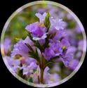 Organic Spice Garden