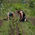 Farming Consultants