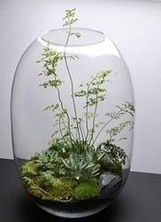Terrarium Kochi A Green Dream Id 7495910255