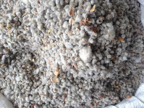 Cotton Seed