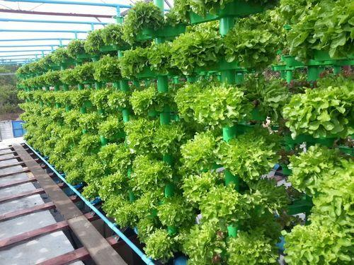Service Provider Of Poly House Amp Hydroponic Kits By Flora