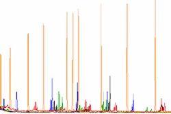 Fragment Analysis
