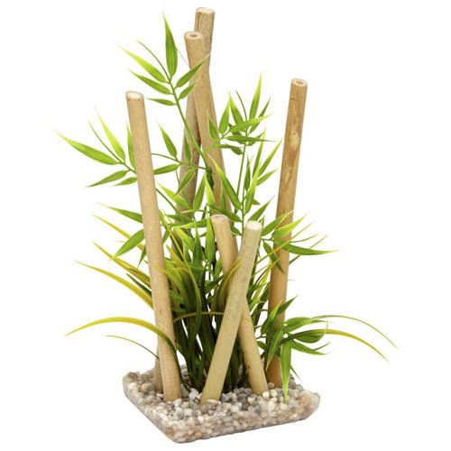 Bamboo Plants - Wholesale Price for Bamboo Plants in India