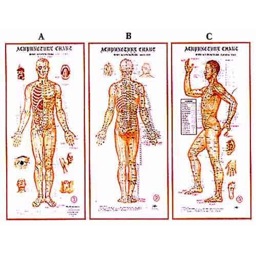Acupuncture body charts at rs 3250 unit kondithope chennai id
