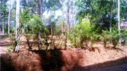 Residential Plot Is Near Kechery Thrissu