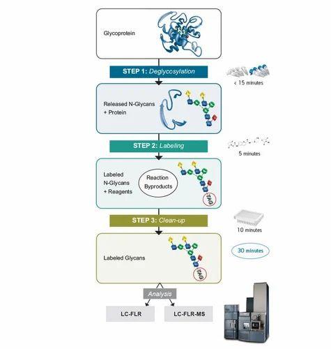 Exporter of GlycoWorks RapiFluor-MS N-Glycan Kit & Breeze 2 HPLC by