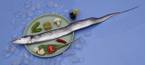 Frozen Ribbon Fish - View Specifications  Details Of -3290