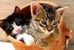 Cats Treatment Services
