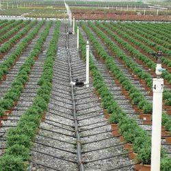 Drip Irrigation Services In India