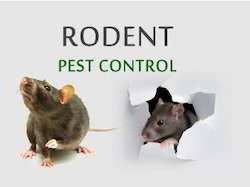 Industrial Spray Rodent Control Service, Rajasthan