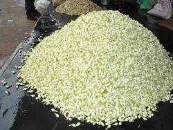 Madurai Malli Flower