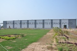 IQF Vegetables And Green Peas With Pre-processing Line
