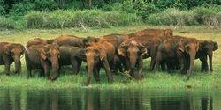Wild Life Safaris Services