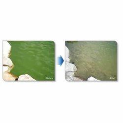 Green Algae Removal Treatment