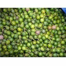 Podocarpus Nagi Seeds