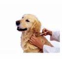 Pet Supplement Service