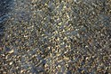 Semi Dense Bitumen Concrete Testing Service