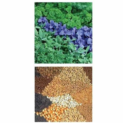 Organic Herbal Seeds