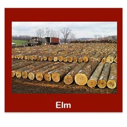 List Of Synonyms And Antonyms Of The Word Elm Logs