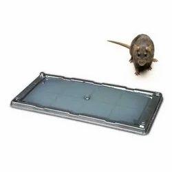 Rat Trap Glue