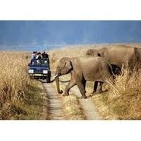 WildLife Tour Packages Service