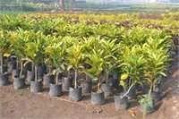 Outdoor Decorative Plant