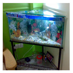 Corner Aquarium View Specifications Details Of Corner Fish Tank