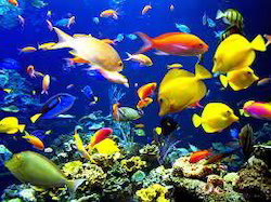 Ornamental Fishes