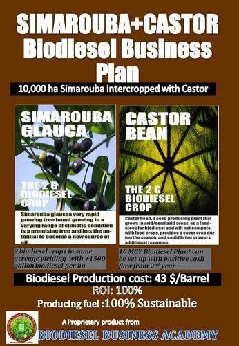 how to start a biodiesel plant