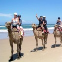 Camel Safari Tours