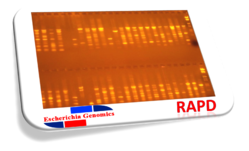Insects RAPD DNA Fingerprinting