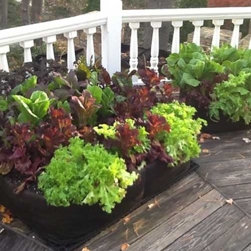 Vertical Terrace Gardening