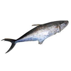 fresh fish taazi machhli suppliers traders amp manufacturers