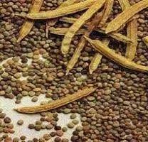 Gum Guar Seeds