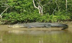 Orissa Wildlife Cultural Tours