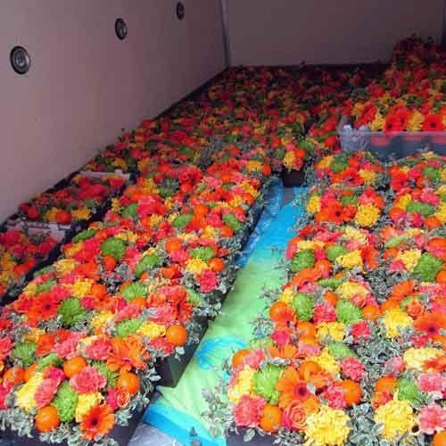 Flowers Cold Storage & Flowers Cold Storage Commercial Cold Storages in Chrompet Chennai ...