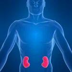 Nephrology Kidney