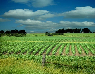 Agriculture Land For Sale in Bareilly, Badaun by V
